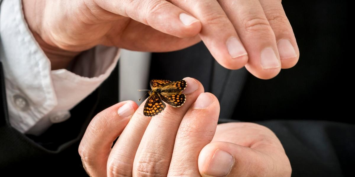 A man carefully hold a small butterfly in his hands, illustrating the nurturing of online leads
