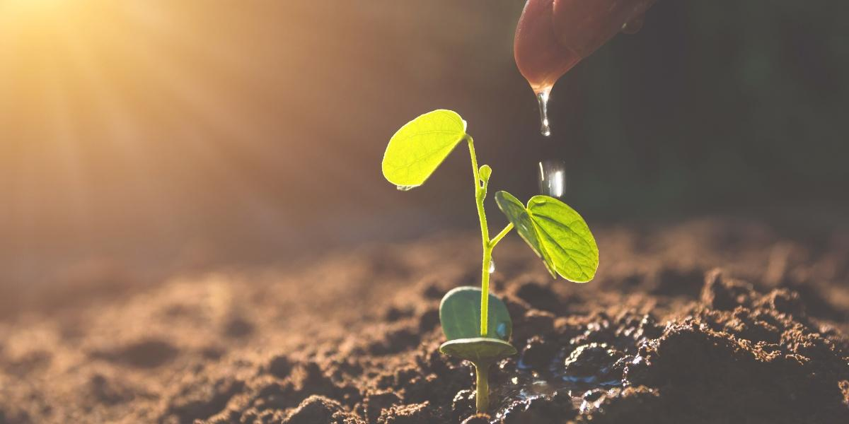 A plant being watered by hand, representing a targeted email lead nurturing campaign strategy.