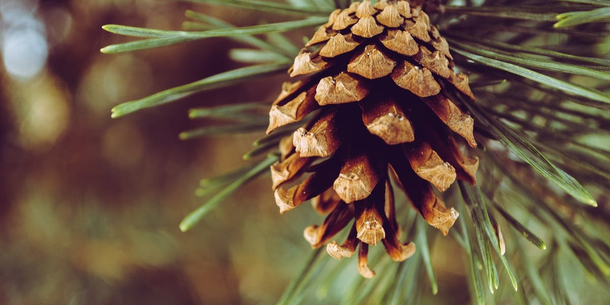 SEO Content | Seasonal Keywords | THAT Agency